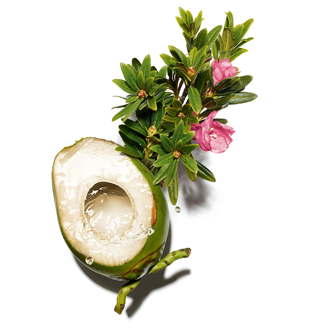 Agua de coco y extracto de reina de los Alpes