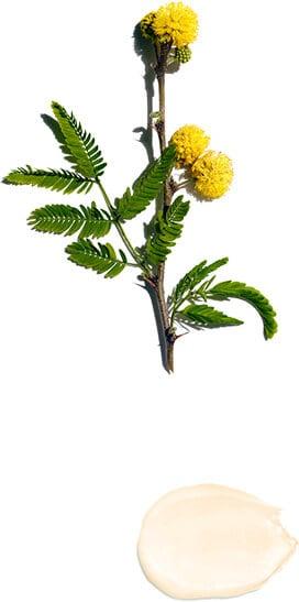 Flor de grosella