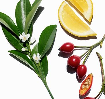 Imagen de ingredientes y plantas