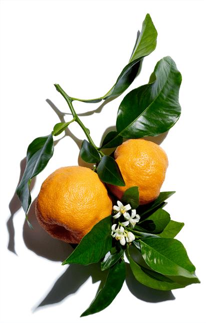 Cera de naranjo amargo