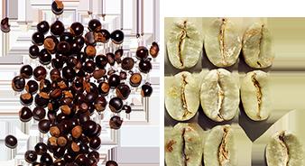Extracto de guaraná orgánico y cafeína vegetal
