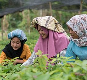 Mujeres jóvenes en los arrozales