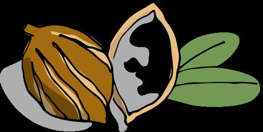 Ilustración del fruto del karité Bálsamo Superhidratante para el Cuerpo