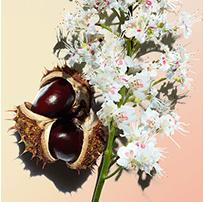Flor del castaño de Indias