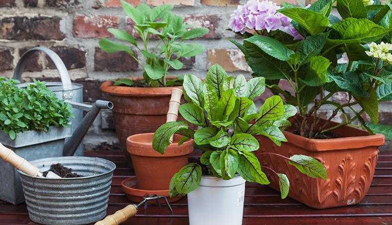 Las plantas que te sientan bien
